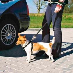 Cinto Seguranca & Peitoral S 30-60cm