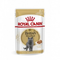 British Shorthair 85g