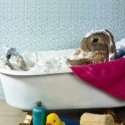 Rodents Hygiene
